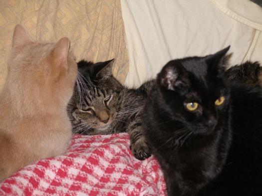 3_Cat_Pileup.jpg