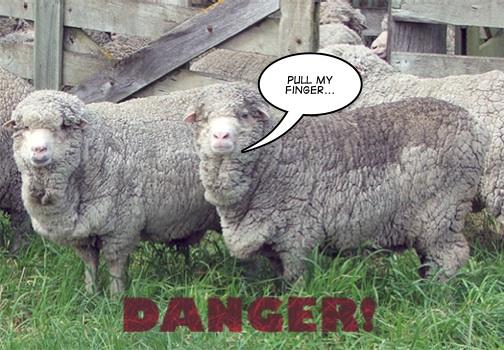 Sheep-Farts2.jpg