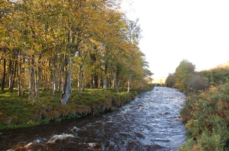 Birch Trees Across the Dunbeath Water 460.jpg