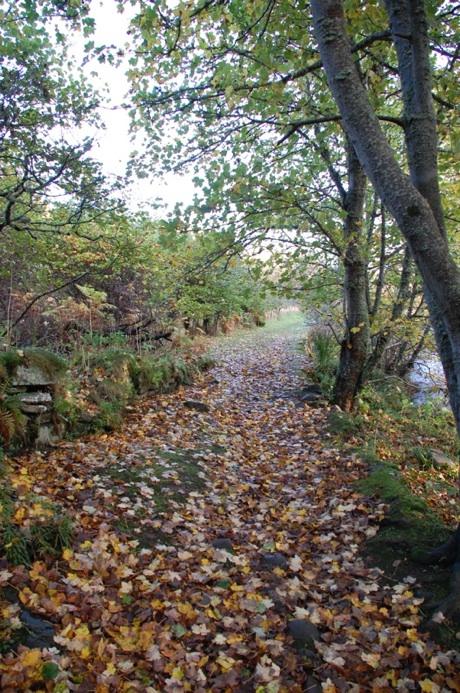 Heritage Trail 460.jpg